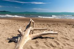 Snag on a beach Stock Photos