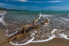 Snag on a beach - stock photo