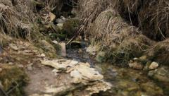 Stock Video Footage of spring rivulet in the forest