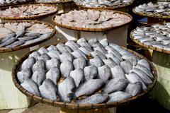 Sundry Snake Skin Gourami Fish in a bamboo basket. Thailand Kuvituskuvat
