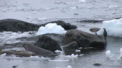 Southern Fur Seal on the rocks in Paradise Harbour, Antarctica - stock footage