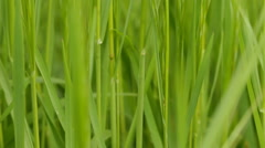 Blades of Grass Stock Footage