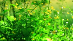 Grass near the river Stock Footage