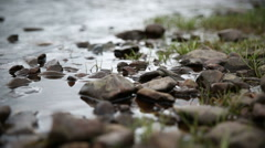 Grass and stone in the water Stock Footage