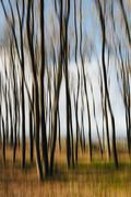 Blurred motion. Maple trees in autumn, moving in the breeze. Stock Photos