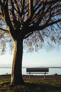 Beech tree in autumn and park bench with a view over Puget Sound at dusk. Stock Photos