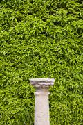 Column Pedestal and Living Wall - stock photo