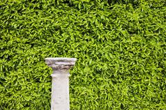 Hedge Background and Column Pedestal - stock photo