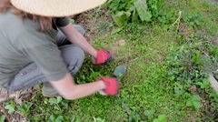 Mature woman gardening, close up Stock Footage