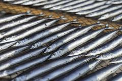 Fish drying under the sun in a shop in Ito, Shizuoka Prefecture, Japan Stock Photos