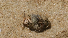 Pair of hermit crabs in the sand close-up 4k Stock Footage