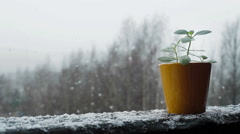 Green plant in a vivid pot at a snow falling background waiting for summer Stock Footage