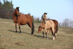 Batch of horses on autumn pasturage Stock Photos