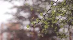 Snow falls on the young green leaves and grass Stock Footage