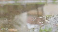 Tiny raindrops falling on pond water surface shallow DOF 4K 2160p UltraHD foo Stock Footage