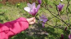 Magnolias in bloom in botanical garden Stock Footage