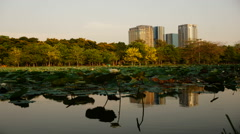 Day to night timelapse Pond in park Bangkok,Thailand footage Stock Footage