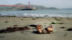 Golden Gate Crab Stock Footage