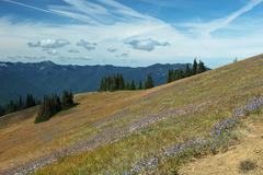Hurricane Ridge, Olympic National Park, Washington, USA Stock Photos