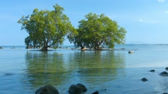 Mangrove Trees in the Shallow, Tropical Water at Low Tide Stock Footage