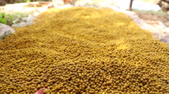 A large pile of chickpeas at market in Goa. Stock Footage