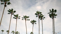 Motion Control Pan/Tilt Time Lapse of Clouds over Palm Trees -Long Shot- Stock Footage