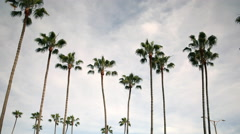 4K Motion Control Pan/Tilt Time Lapse of Clouds over Palm Trees -Long Shot- Stock Footage
