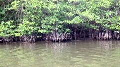 Mangrove forest in Malaysia Arkistovideo