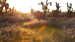 Stock Video Footage of 3 Axis Motion Control Time Lapse of Desert Flowers at Sunrise -Zoom Out-