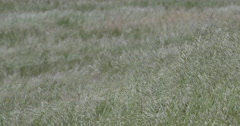 Interesting looking grass blowing in Paso Robles California Stock Footage