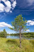 Sunny landscape from finland - stock photo