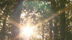 Forest sunrise timelapse. Spring time. - stock footage