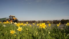 Tractor passing springtime daffodils, bubwith uk Stock Footage
