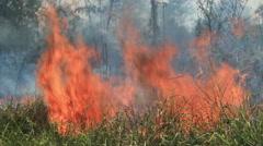Closeup of Bushfire Stock Footage