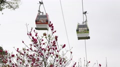 Beautiful tree flowers against gondola lift line, travelling cabins Stock Footage