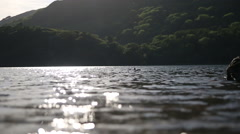 Duck in water Stock Footage