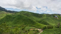 Timelapse of Tea Plantation at Cameron Highland, Malaysia During Daylight  Stock Footage