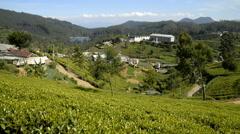 Nuwara Eliya Pedro Tea Estate tea factory & plantation Stock Footage