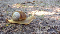 Snail in the forest Stock Footage
