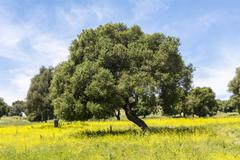 Olives in flowery field in Spring - stock photo