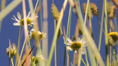 Wildflowers in the sun. Filmed using a polarizing filter Stock Footage