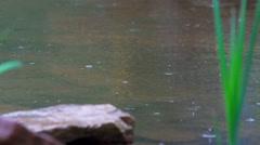 Raindrops falling on a lake Stock Footage
