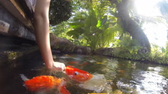 gopro - action of  fancy carp underwater - stock footage