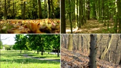 4K compilation (montage) - nature - (forest) trees - four seasons Stock Footage