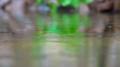 raindrops falling on a lake - stock footage