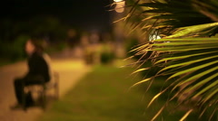 Palm tree leaves and people in background. Stock Footage