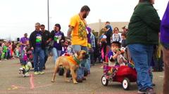 Krewe of Barkus & Meoux Pet Parade Stock Footage