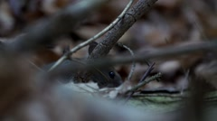 mouse in forest - stock footage