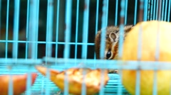 Chipmunk in a cage, it lost freedom Stock Footage