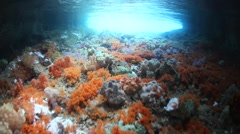 Soft Corals in Tunnel Stock Footage